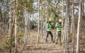 Impatto ambientale, Riforestazione, Restore Fund
